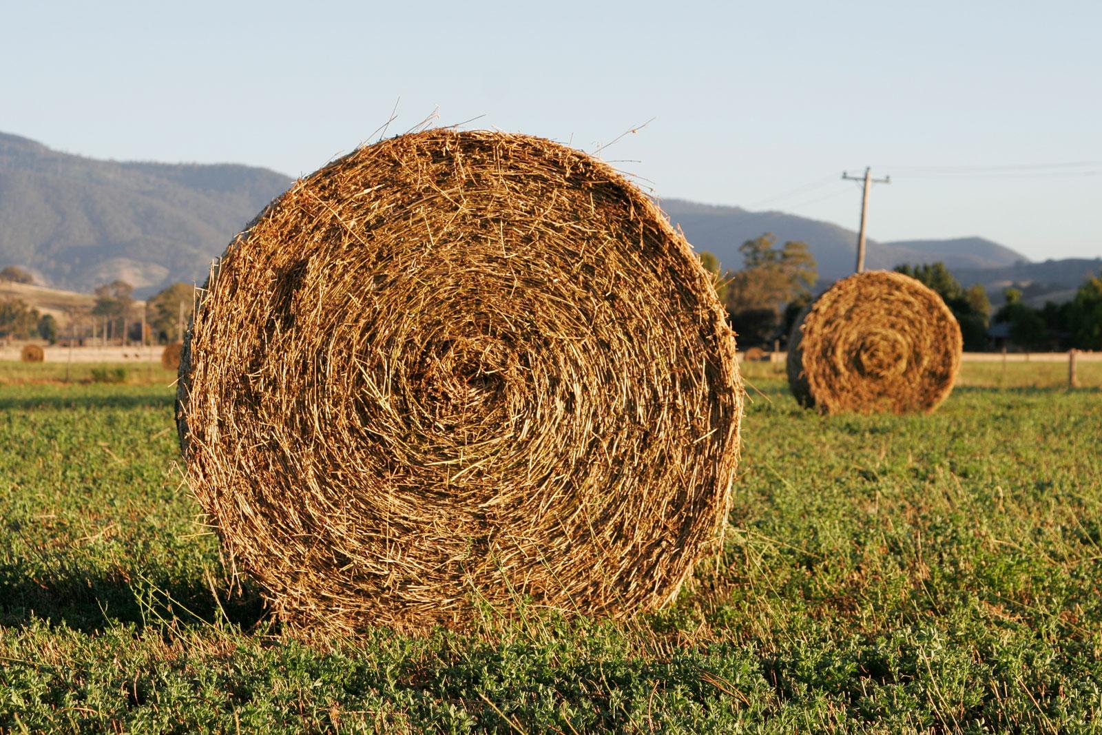 [Image: hay.jpg]